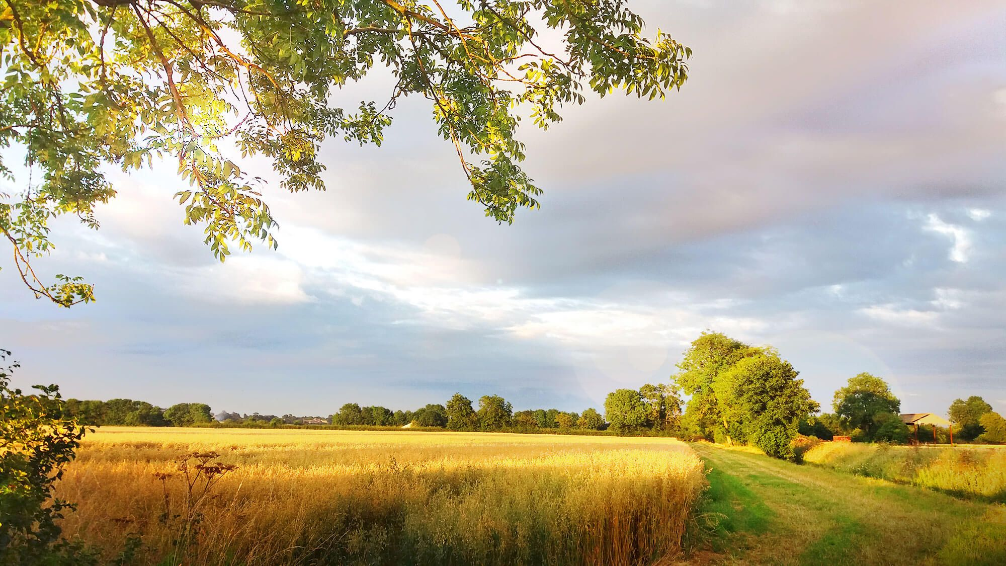 Fields near Scarborough