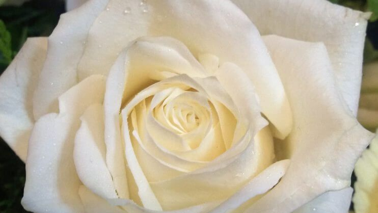 Funeral Flowers White Rose
